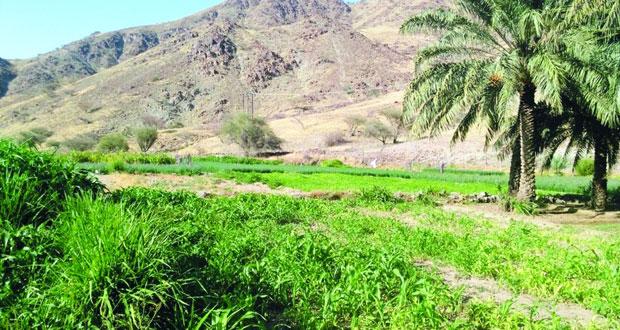 أهالي قرى وادي الجوابر بالرستاق يطالبون برصف الطريق المؤدي إلى قراهم