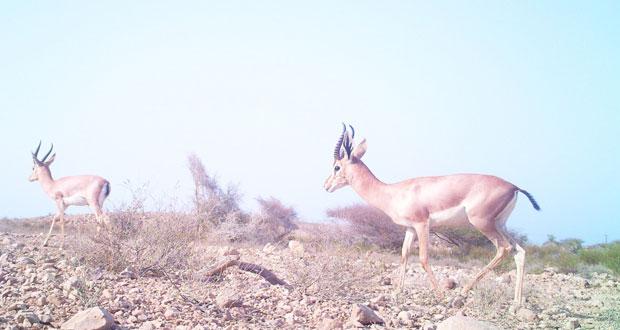 تنوع إحيائي فريد بمحمية رأس الشجر بقريات على مساحة 94 كيلو متر