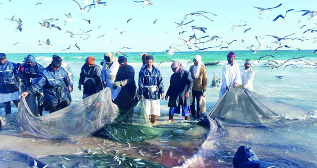 أكثر من 29 مليون ريال عماني صادرات السلطنة من أسماك السردين العام الماضي