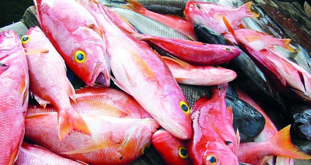 توفر أسماك القاع بأسواق جعلان بني بوعلي