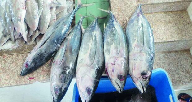 مصادرة وإتلاف أكثر من (260) كيلوجراماً من الأسماك الفاسدة بسوق سناو