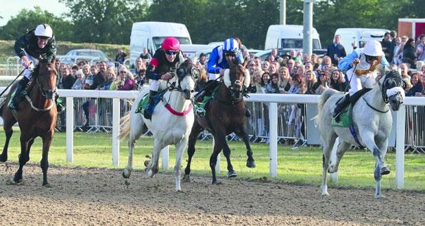 منافسة وإثارة يشهدها سباق الخيالة السلطانية للخيول العربية بمضمار شيلمسفورد الإنجليزي