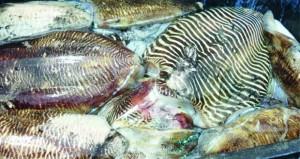 تنوع الثروات البحرية يساهم في قيام الكثير من المشاريع السمكية بجنوب الشرقية