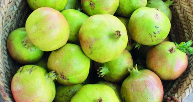 10 حبات من رمان الجبل الأخضر بـ 15 ريالا عمانيًّا بسوق نـزوى