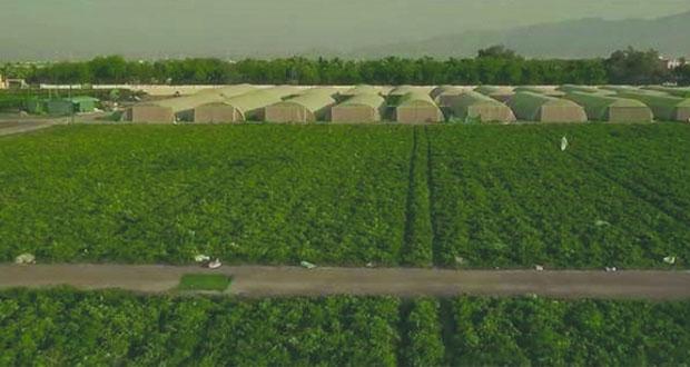 دراسة لزيادة إنتاج الزراعة المحمية وكفاءة استخدام المياه