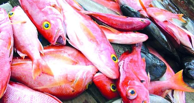 60.6 مليون ريال عماني قيمة الأسماك المنزلة بالصيد الحرفي بنهاية الربع الأول
