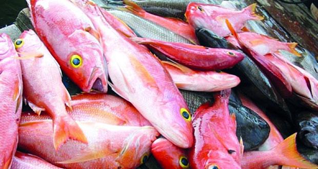 37ر63 طن من الأسماك سنويًّا معدل إنتاجية الصياد العماني بالصيد التقليدي