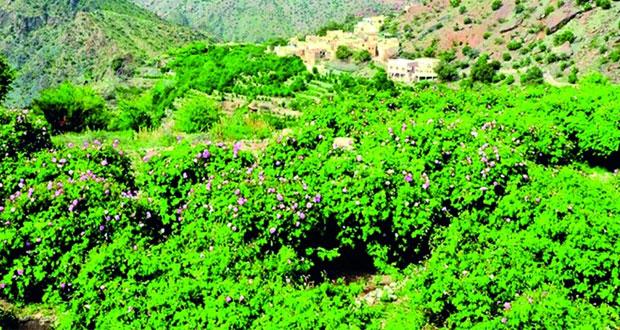 الجبل الأخضر .. مقصد طبيعي ووجهة سياحية على مدار العام