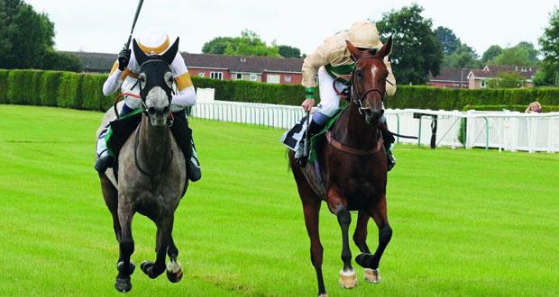 منافسة قوية تشهدها النسخة الثامنة لمهرجان منصور بن زايد العالمي للخيول العربية الأصيلة