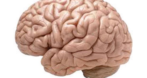 بإبطاء الموت الدماغي .. أمل جديد لمرضى الزهايمر