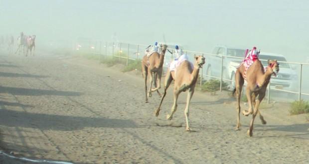أهالي بركاء ينظمون سباقا للهجن بمناسبة الاحتفال بعيد الأضحى المبارك