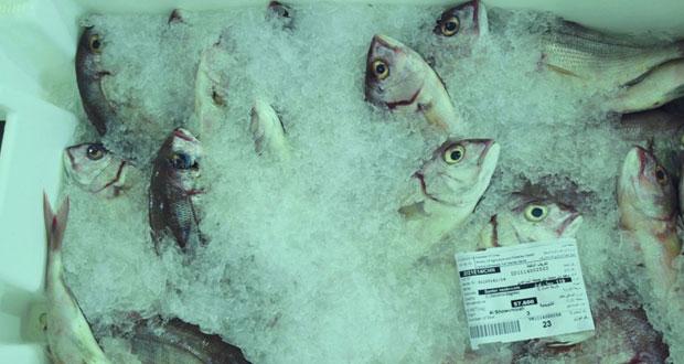 1.5 مليون ريال عماني إجمالي مبيعات سوق الجملة المركزي للأسماك حتى نهاية يونيو