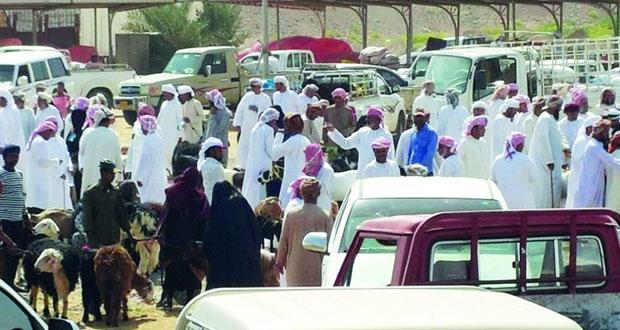 تجاوز سعر رأس الغنم 250 ريالاً عمانياً في أسواق جعلان