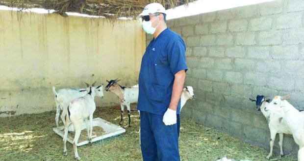 التنمية الزراعية بأدم تنفذ زيارات ميدانية ارشادية لمربي الحيوانات