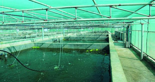 غدا.. الانتهاء من تسجيل طلبات مشاريع الاستزراع السمكي التجارية