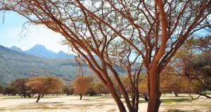 """مشاركة مجتمعية واسعة في مبادرة استزراع النباتات البرية العمانية """"أشجار"""""""