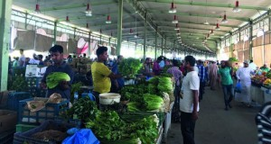 سوق الموالح يشهد إقبالا جيدا على المنتجات المحلية مع بدء الحصاد الشتوي