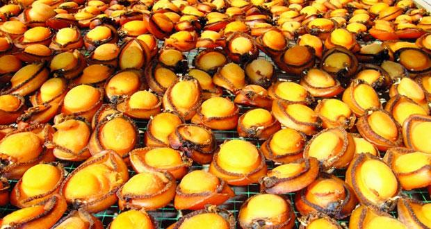 ديسمبر القادم.. بدء موسم صيد الصفيلح بمحافظة ظفار