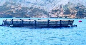 وزير الزراعة والثروة السمكية: قريبا الإعلان عن أكبر مشروع للاستزراع السمكي في السلطنة