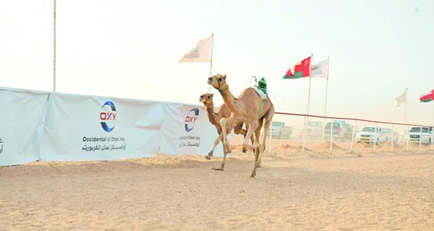الاتحاد العماني ينظم أولى سباقات الهجن بولاية هيماء
