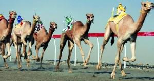 انطلاق فعاليات سباق العام للهجن وأوكسيدنتال عمان ترصد 10 سيارات للفائزين
