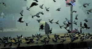الضباب الدخاني يخنق نيودلهي مع وصول نسب التلوث إلى مستويات خطيرة