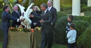 أوباما (يعفو) عن ديك رومي