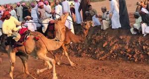 ميدان وادي أبو فشيقة بجعلان بني بوعلي يشهد ركضة عرضة الإبل