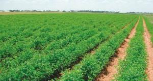 جهود عمانية مستدامة لتحقيق الأمن الغذائي نالت ثقة الجهات الدولية