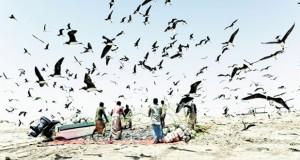 الصيادون الحرفيون.. أهمية مستمرة في زيادة الإنتاج السمكي وتحقيق الأمن الغذائي