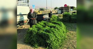 بائعو الأعلاف الحيوانية بقريتي العراقي والعينين بعبري يطالبون إنشـاء مظلة حماية