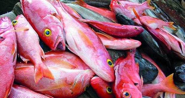 إصدار25 مؤلفا علميا عن القطاع السمكي خلال العام الماضي