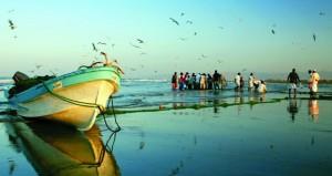 136.7 مليون ريال عماني قيمة الأسماك المنزلة بالصيد الحرفي بنهاية سبتمبر 2016