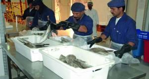 التصنيع السمكي.. استغلال الموارد السمكية المتنوعة بكفاءة في إنتاج الغذاء