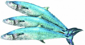 دراسة علمية: هجرات الكنعد تتأثر بشكل كبير بالتغيرات السنوية في درجات حرارة البحر