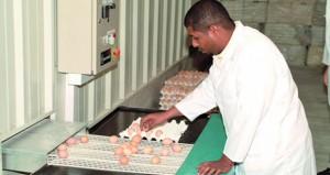 رئيس مجلس إدارة الشركة العمانية للاستثمار الغذائي القابضة: الاستثمارات المتكاملة في مشاريع الدواجن تدعم منظومة الأمن الغذائي