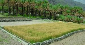 حظر نقل التربة من الأرض الزراعية أو تجريفها أو ردمها بتربة غير صالحة للزراعة