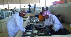 3.6 مليون ريال عماني قيمة مبيعات سوق الجملة للأسماك في 2016