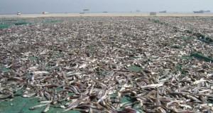 المحافظة على الصناعات الغذائية التقليدية بمشروع تطوير مصانع تجفيف وتمليح الأسماك