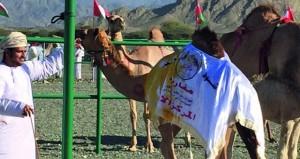 انطلاق مهرجان المزاينة الثالث بولاية ينقل بمحافظة الظاهرة