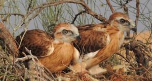 عرض مرئي يستعرض مشروع مسح الطيور الشاطئية والنسور والعقبان
