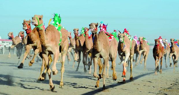 الجمعة … انطلاق مهرجان كهنات لركض العرضة للهجن بعبري