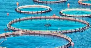 الاستزراع السمكي.. مقومات حقيقية تنتظر رؤوس الأموال المستثمرة