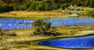 بحيرات الأنصب .. وجهة سياحية وبيئة آمنة للحياة الفطرية
