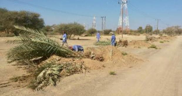 بلدية القابل تنقل ٣٠٠ شجرة نخيل متأثرة بازدواجية بدبد – صور