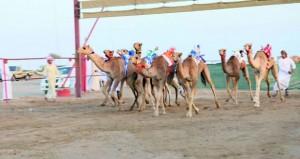 انطلاق أولى فعاليات مهرجان النوادر لسباقات الهجن بولاية الكامل والوافي