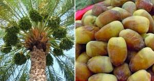 غذاء ودواء في عمود الزراعة العمانية
