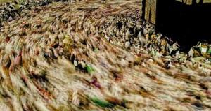حسين البحراني وسالم الحجري يفوزان في جائزة الشارقة للصورة العربية