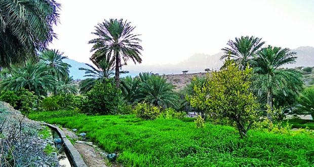 وادي السحتن .. مندوس عمان الزراعي