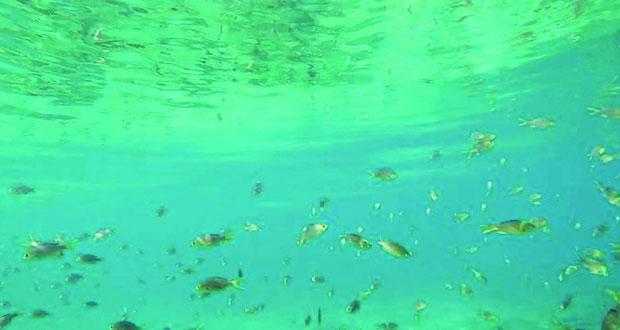 الشعاب المرجانية المليئة بها الجزيرة